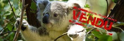 koalo vendu