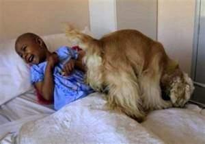 des animaux pour soulager les enfants malades du cancer. Black Bedroom Furniture Sets. Home Design Ideas