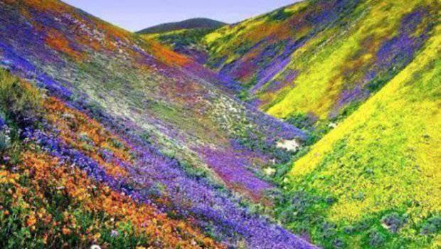 millions de fleurs