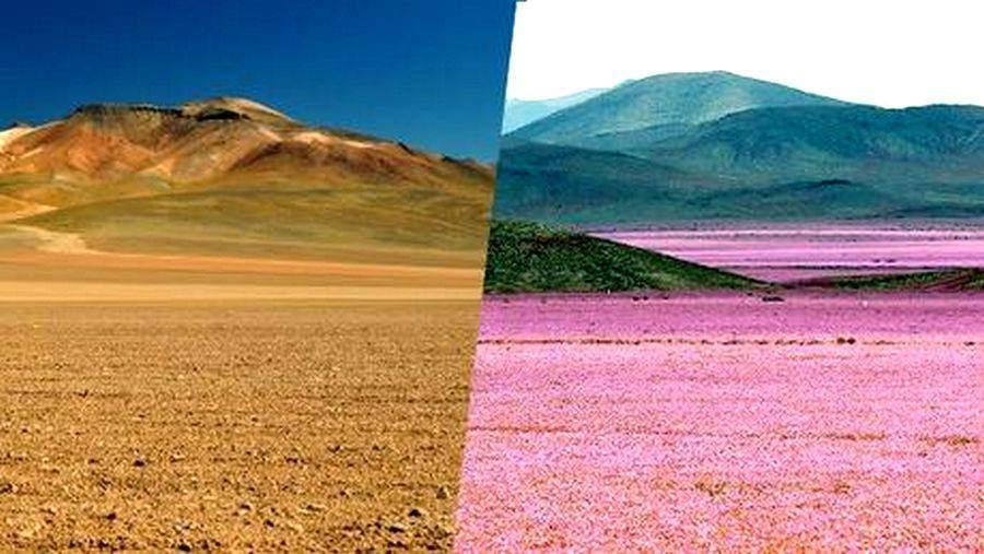 des millions de fleurs