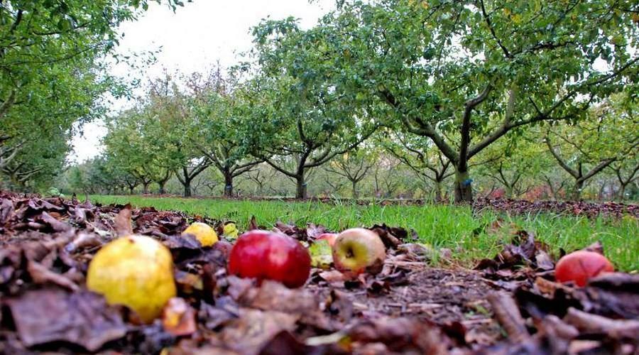 Pommes de l'est de la France