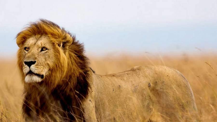animaux inoubliables de 2015