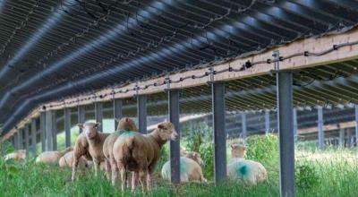 Les moutons y trouvent leur compte eux au moins