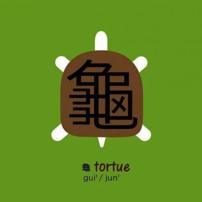 7 tortue