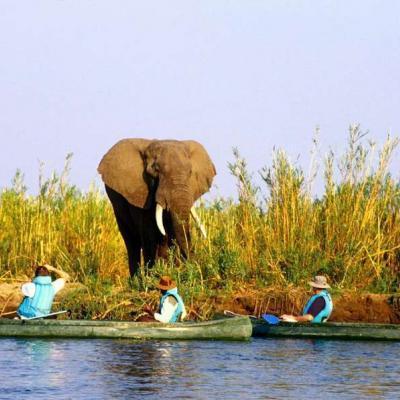 Canoeing zambi
