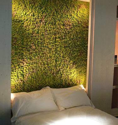 Moss-in-the-bedroom-1523