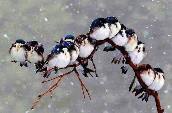 aider les oiseaux