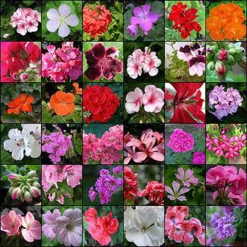 Des plantes d polluantes pour purifier l 39 air de la maison - Plantes depolluantes pour la maison ...