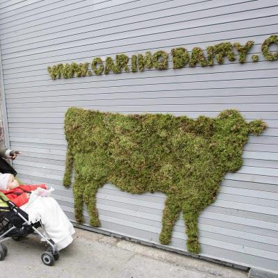 graffiti-mousse-végétal-diy-guide-mur-peinture-18