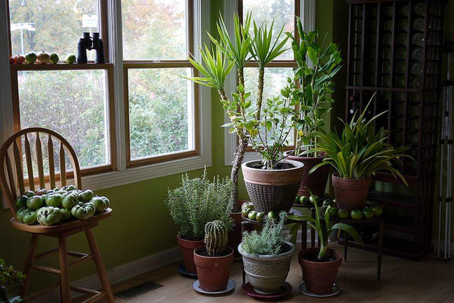 Des Plantes Dpolluantes Pour Purifier LAir De La Maison