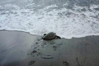 tortues marines