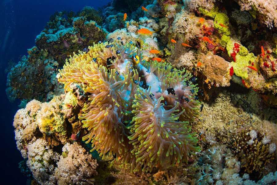 océans en danger