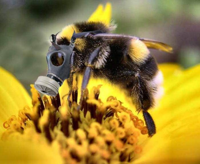 abeilles en danger