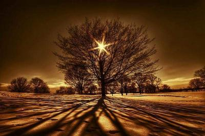 arbre-de-la-vie