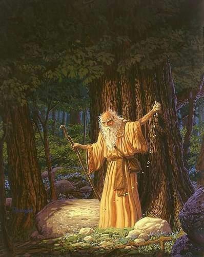 Découvrez votre arbre protecteur selon l'astrologie des druides Celtes 733285827_01ea7a684c