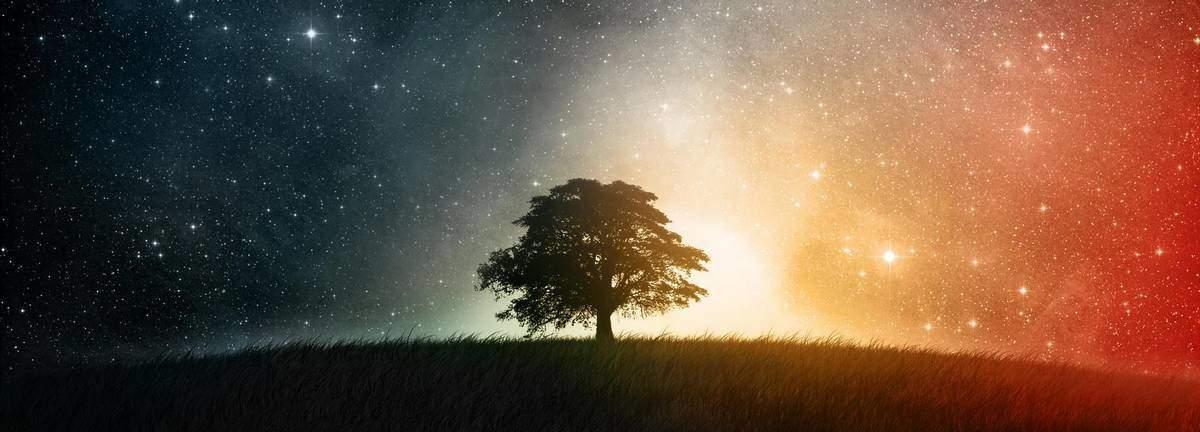 Découvrez votre arbre protecteur selon l'astrologie des druides Celtes Fonds-ecran-hd_paysages_03