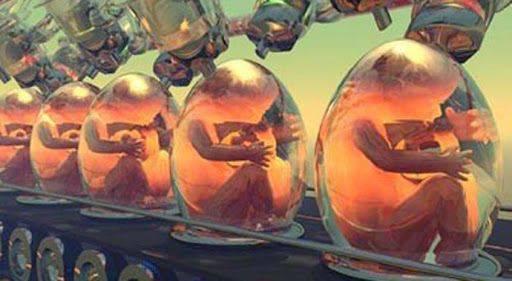 embryon humain