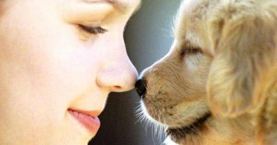 chiens comprennent les émotions