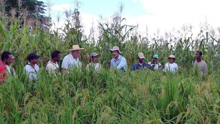 Formation à la culture de maïs en agroécologie Culture de maîs