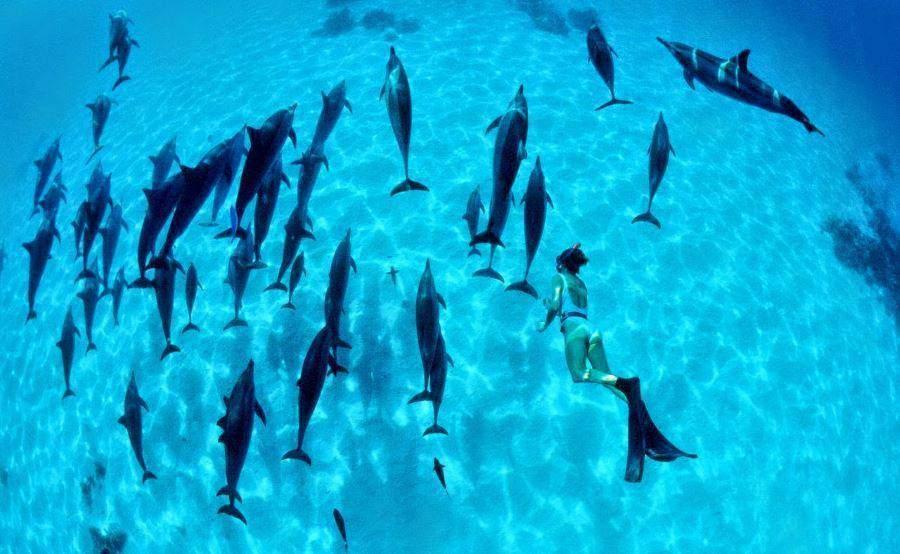 Dix s jours animaliers pour des vacances d stressantes for Nager avec les dauphins nice
