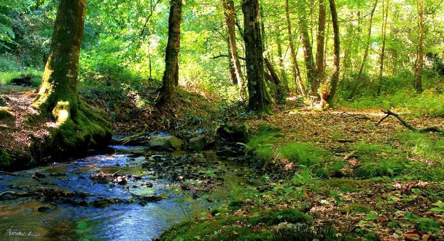forêts protégées