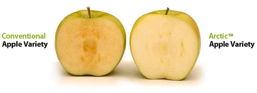 OGM et pesticides à l'école