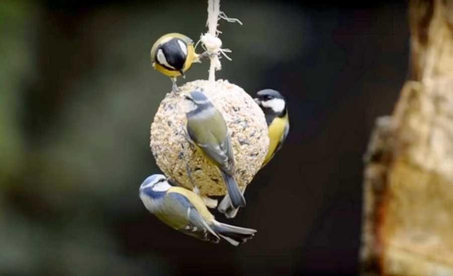 des boules de graines pour les oiseaux du jardin faire avec les enfants. Black Bedroom Furniture Sets. Home Design Ideas