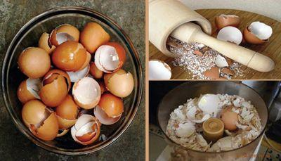 recycler les coquilles d'oeufs