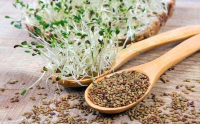 graines germées fibres alimentaires
