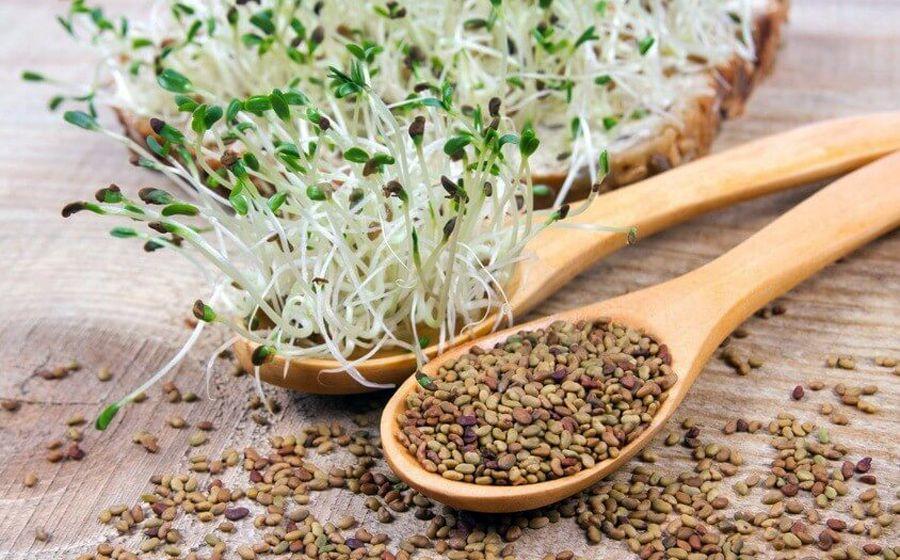 Guide complet des graines germées et leurs qualités ...