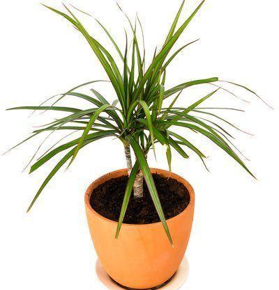 11 Plantes Vertes Dans La Chambre Contre Les Troubles Du Sommeil