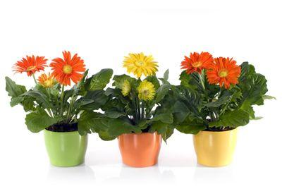 plantes vertes dans la chambre