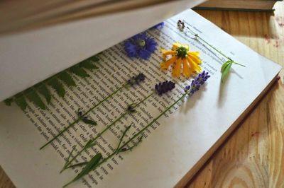 création d'un herbier