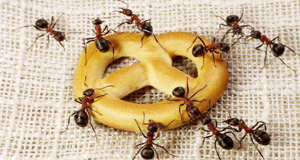anti-fourmi