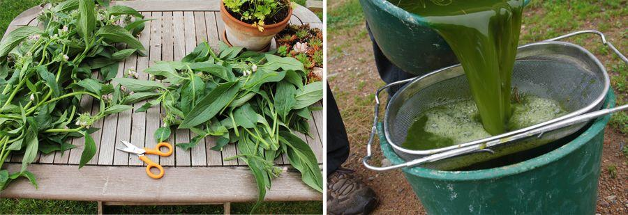 Purin de plantes un fertilisant naturel r pulsif et for Purin de fougeres taupin