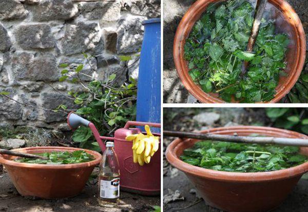 plante repousse taupe awesome galement appele herbe de saintjulien elle dveloppe de juin. Black Bedroom Furniture Sets. Home Design Ideas